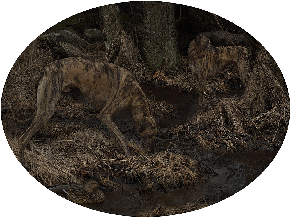 Mud Dogs, 2014, C-print siliconemounted on plexi, 75 x 100 cm, edition of 5