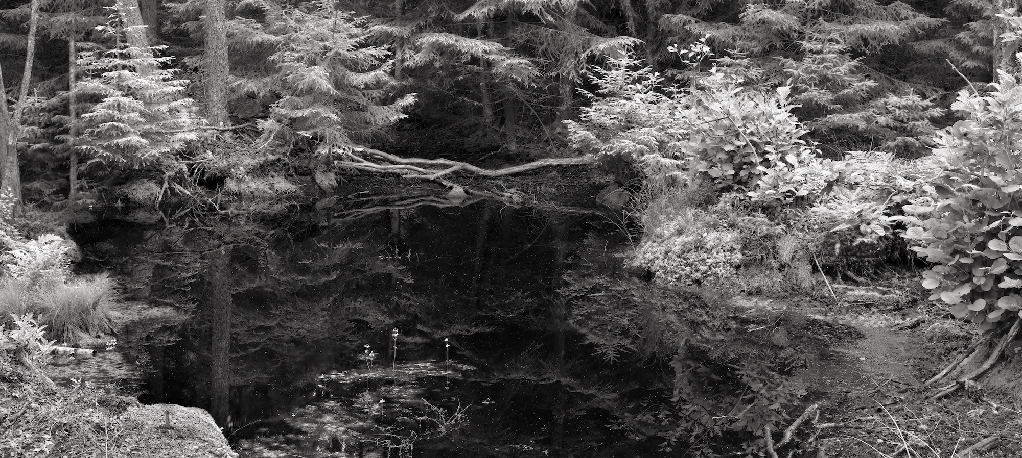 Lovisa Ringborg, Forest, 2020, Silver gelatin print mounted on aluminium, museum glass, walnut frame, 88 x 193,5 cm, edition of 5